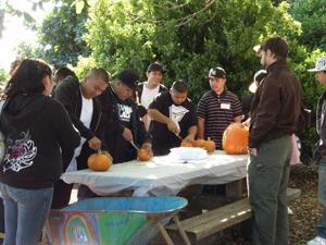 pumpkin carving.eddy