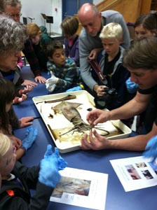 """Students joined by their parents get """"hands on"""" with a giant squid."""
