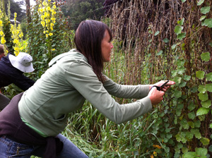 Jane Forbes harvesting peruvian nasturtiums